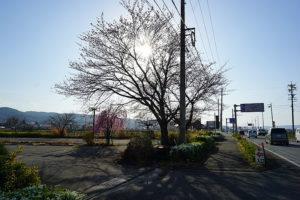この先に佐久南I.Cがあります。敷地内には何本かの桜の木がございます。