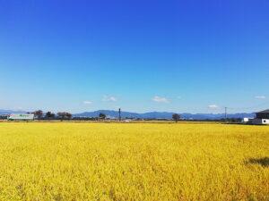 一面に広がる田園風景。(周辺)